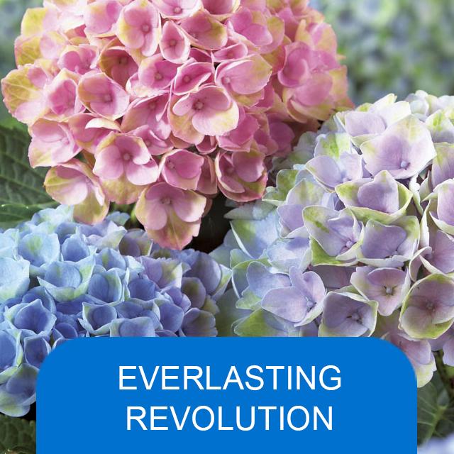 Everlasting Revolution