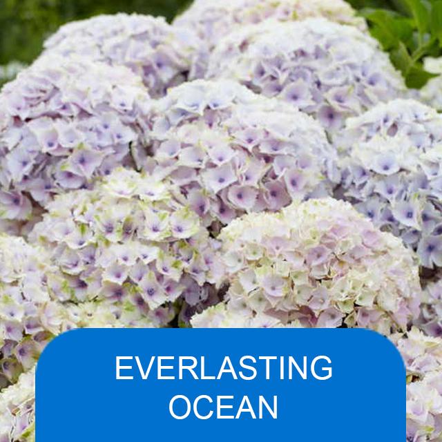 Everlasting Ocean