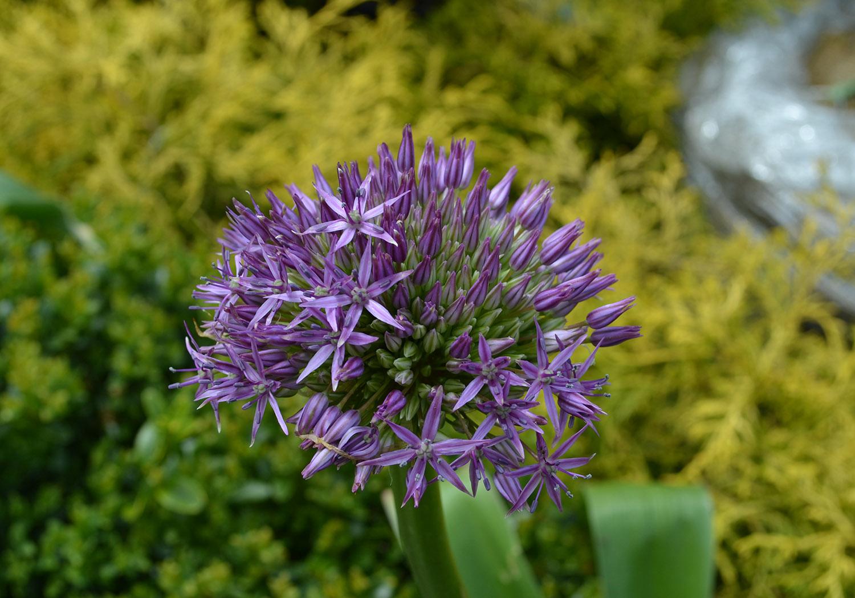 Blog Top 10 Summer Blooming Perennials