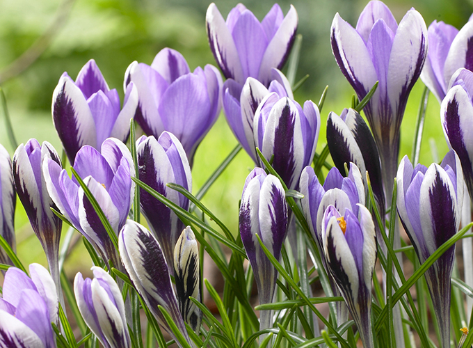 Blog 16 Of Our Favorite Easter Plants Flowers