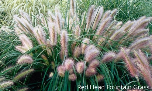 Blog The Guide To Perennial Grasses