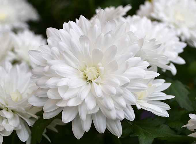 Blog 16 of our favorite easter plants flowers particularly festive this year easter bouquet a tri color plant in pink white and yellow available as plants or fresh cut flowers mightylinksfo