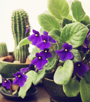 Florist Sidebar