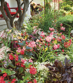 Color All Season English Gardens Tips For Planting Annuals