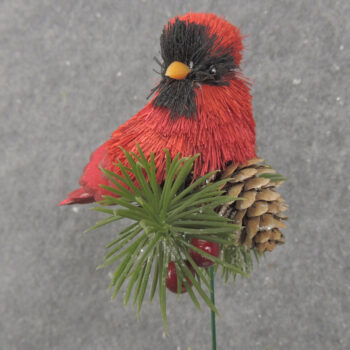 Cardinal Pine Branch