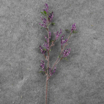 Icy Purple Twig