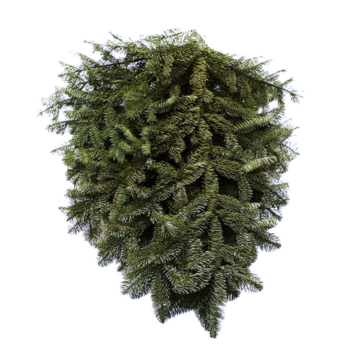 Noble Fir Tips Bunch