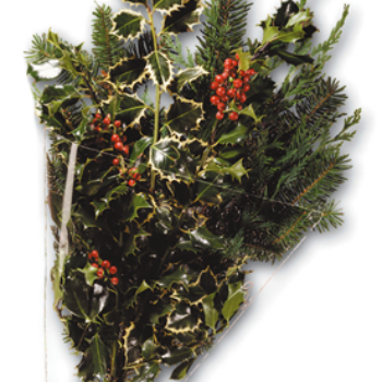 Evergreen Holly Bunch