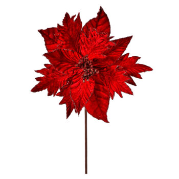 Dark Red Velvet Poinsettia