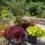 Tips for Bringing House Plants Inside