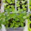 January Gardening Tips