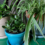 Easy Plants to Add to Your Family