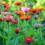 Environmentally Friendly Garden Tips