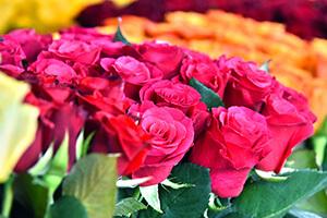EG-Menu-Floral-Special