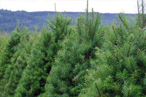 EG-Menu-Fresh-Christmas-Trees