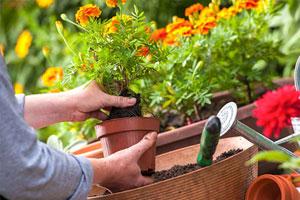 EG-Menu-Outdoor-Plants