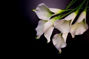 English-Gardens-Sympathy-Flowers