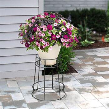 European Basic Pedestal Plant Stand