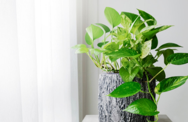 House Plants for Healthy Living August