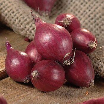 Onion Red Karmen