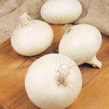 Onion White Snowmall