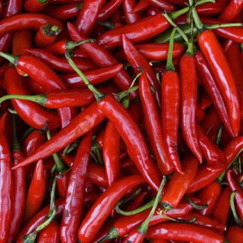Chef Jeff Serrano Salsarific Pepper