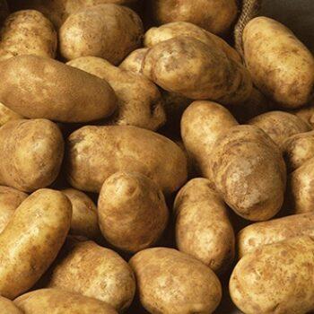 Potato Russet Goldrush
