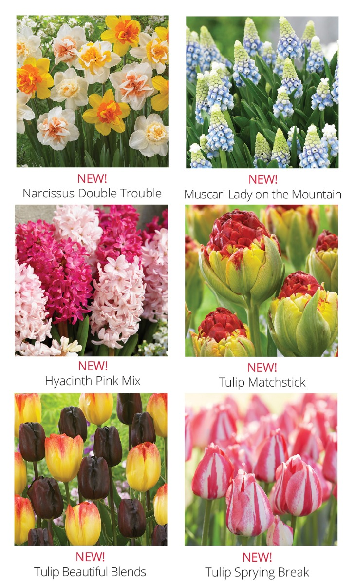 Plant Bulbs In The Fall For Beautiful Spring Color