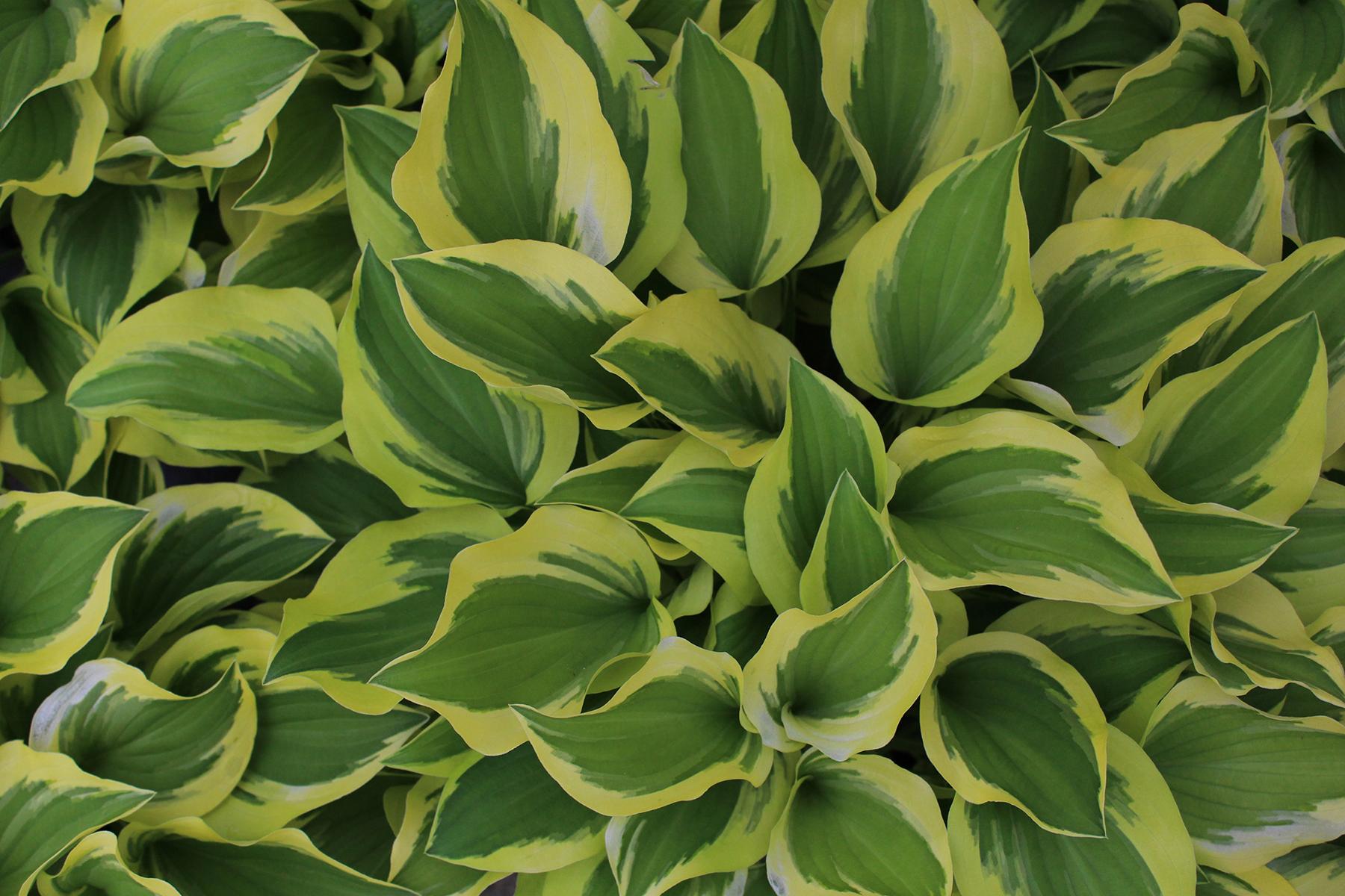 Top 10 Low Maintenance Perennials